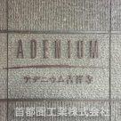 アデニウム吉祥寺